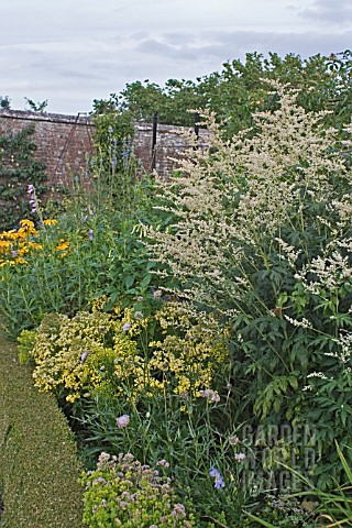 ASTILBE_RIVULARIS_CONTRASTING_WITH_ASTER_ERICOIDES_GOLDEN_SPRAY_AUGUST_BORDERS__WEST_DEAN