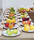 DISPLAY OF OLD APPLE VARIETIES. WEST DEAN APPLE FESTIVAL