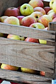 WOODEN CRATE OF OF OLD APPLE VARIETIES