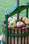 APPLE PRESS FOR MAKING PURE APPLE JUICE OR CIDER. FESTIVAL