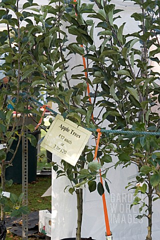 YOUNG_APPLE_TREES_FOR_SALE_WEST_DEAN_APPLE_FESTIVAL