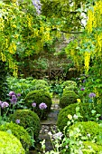 BARNSLEY HOUSE GARDENS, ALLIUM PURPLE SENSATION PLANTED BENEATH LABURNUM ARCHWAY