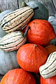 JAPANESE WINTER SQUASH UCHIKI KURI (ORANGE), WINTER SQUASH DELICATA (STRIPED) AND WINTER SQUASH CROWN PRINCE