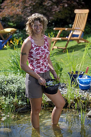 PLANTING_UP_POND_WIH_PLANTS_WATER_GARDEN_MAINTENANCE_WORKS
