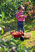 CHILD COLLECTING APPLES