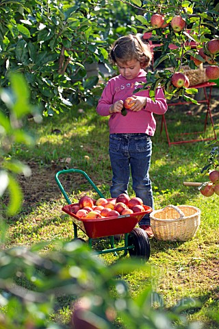 CHILD_COLLECTING_APPLES