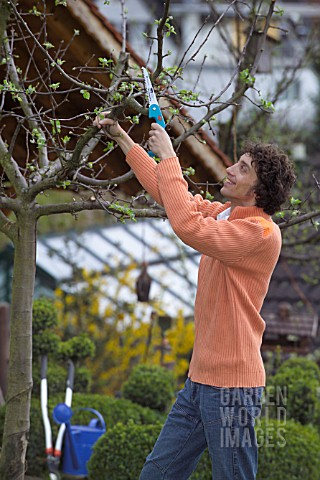 MAN_PRUNING__CUTTING_APPLE_FRUIT_TREE_IN_EARLY_SPRINGTIME