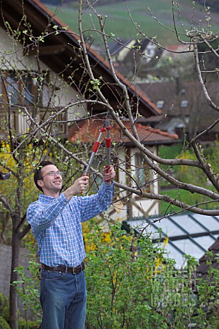 MAN_PRUNING__CUTTING_APPLE_FRUIT_TREE_IN_EARLY_SPRINGTIME_WITH_LOPPERS