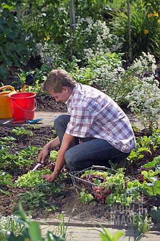 HARVESTING_VEGETABLES_FROM_THE_KITCHEN_GARDEN