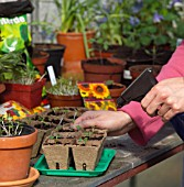 RE-POTTING YOUNG SEEDLINGS IN GREENHOUSE - WATERING