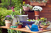 GETTING READY FOR SUMMER PLANTING - CONTAINER PLANTING