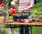 WATERING PLANTS - CONTAINER PLANTING