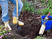 PLANTING A ROSE - DIGGING A HOLE