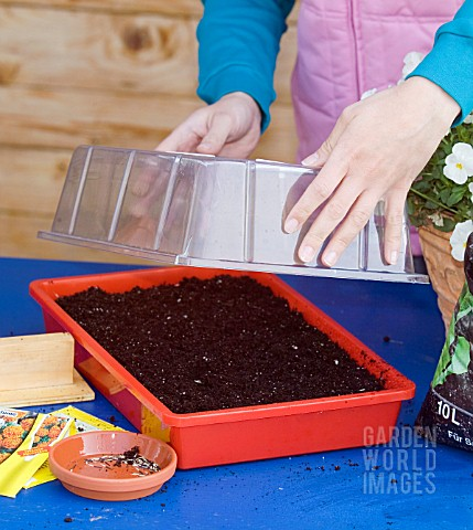 COVERING_MARIGOLD_SEED_TRAY