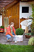 WINTER PROTECTION.  LADY WRAPPING BUXUS CONTAINER TO PROTECT ROOTS WITH BUBBLE WRAP FOR INSULATION.