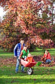 FAMILY ENJOYING CLEARING LEAVES FROM BENEATH TREE, CHILDREN BEING PUSHED IN BARROW.