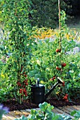 TOMATO AND VEGETABLES IN GARDEN WITH FLOWERS