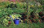 ORGANIC SUMMER VEGETABLE GARDEN WITH FLOWERS