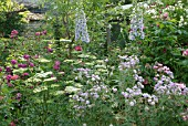 BORDER OF PERENNIALS : GÉRANIUM PRATENSE SUMMER SKIES. GARDEN OF ANDRÉ EVE. PITHIVIERS. LOIRET