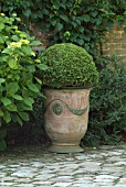 BUXUS (BOX BALL) IN POT. LES GARDENS OF MAIZICOURTYARDT. SOMME