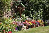 CONTAINER GARDENING IN THE SUMMER. A SELECTION OF PLANTS AND FLOWERS FOR EFFECTIVE COLOUR IN THE SUMMER.