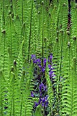 FERNS AND BLUEBELLS