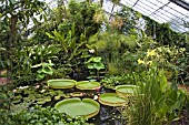 THE TROPICAL GLASSHOUSE AT DUNDEE BOTANIC GARDENS