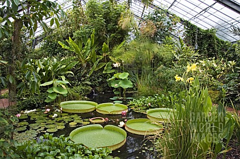RC3390- THE TROPICAL GLASSHOUSE AT DUNDEE BOTANIC G : Asset Details ...
