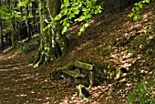 WOODEN SEAT IN WOODLAND AT DRUMLANRIG COUNTRY PARK, DUMFRIES & GALLOWAY