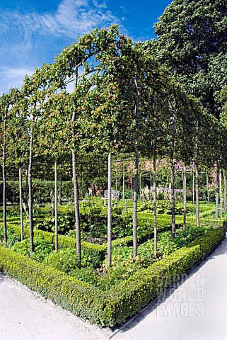 ESPALIERED_CRAB_APPLE_TREES_ALNWICK_GARDEN