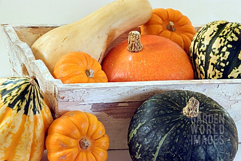 WOODEN_BOX_OF_WINTER_SQUASHES_AND_PUMPKINS