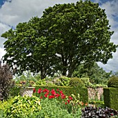 BORDERS OF HERBACEOUS PERENNIALS, YEW HEDGES, MATURE TREES AND SHRUBS AT WOLLERTON OLD HALL