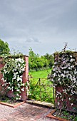 BRICK PATH TO WROUGHT IRON GATE WITH CLEMATIS MONTANA PINK PERFECTION AT WOLLERTON OLD HALL