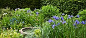 COLOUR THEMED BORDER WITH IRIS SIBIRICA WORTH-THE-WAIT AT WOLLERTON OLD HALL