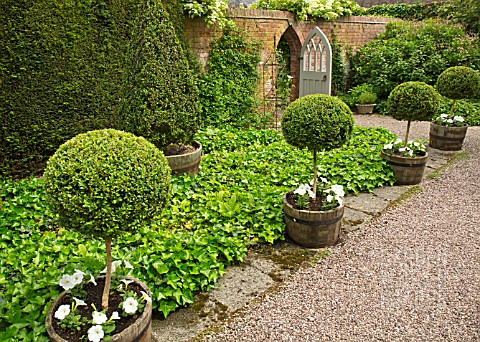 STANDARD_BOX_TOPIARY_UNDERPLANTED_WITH_WHITE_PETUNIAS_IN_WOODEN_CONTAINERS_AT_WOLLERTON_OLD_HALL_