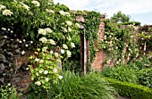 BRICK WALL WITH CLIMBING ROSE PHYLLIS BIDE AND HYDRANGEA ANOMOLA PETIOLARIS AT WOLLERTON OLD HALL