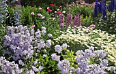 DEEP BORDER OF HERBACEOUS PERENNIALS, PINK PAPAVER, DELPHINIUM AND ROSES, AND ANTHEMIS TINCTORIA E.C. BUXTON AT WOLLERTON OLD HALL