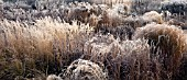 FROSTED BORDERS OF ORNAMENTAL GRASSES, AND SEEDHEADS AT TRENTHAM GARDENS