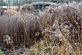 FROSTED BORDERS OF ORNAMENTAL GRASSES, AND SEEDHEADS