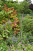 BORDER OF HERBACEOUS PERENNIALS