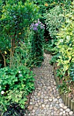 COBBLED PATH THROUGH DENSE FOLIAGED GARDEN