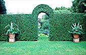 CLIPPED PRIVET HEDGE WITH ARCHWAY