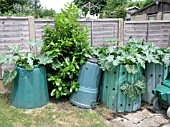COMPOST BINS WITH COURGETTE PLANTS