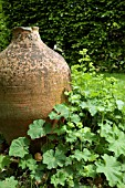 ALCHEMILLA MOLLIS AND LARGE TERRACOTTA POT