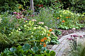 LATE SUMMER PERENNIALS AND ANNUALS