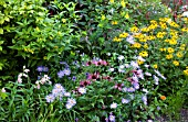 MIXED LATE SUMMER PERENNIAL BED