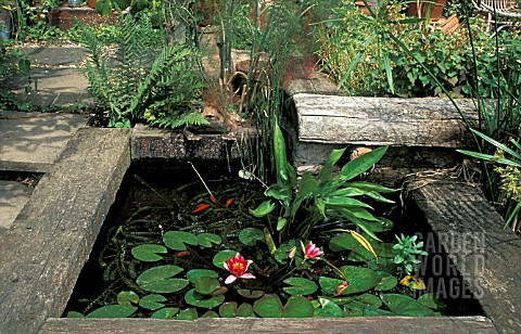 SMALL_POND_WITH_RAILWAY_SLEEPERS_AND_NYMPHAEA