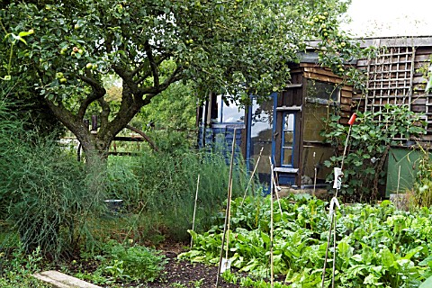 VIEW_OF_VEGETABLE_GARDEN_WITH_SHED