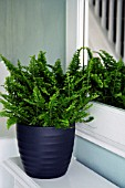 FERN GROWING IN CONTAINER IN HALLWAY