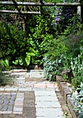 MIXED PAVING IN PATIO AREA COVERED WITH PERGOLA AND MIXED FOLIAGE